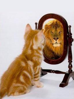 Gatto-Specchio